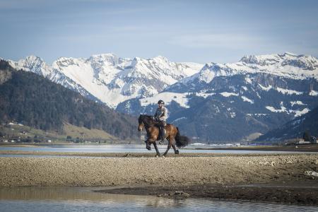 pferde__10