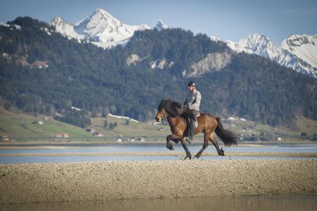 pferde__11