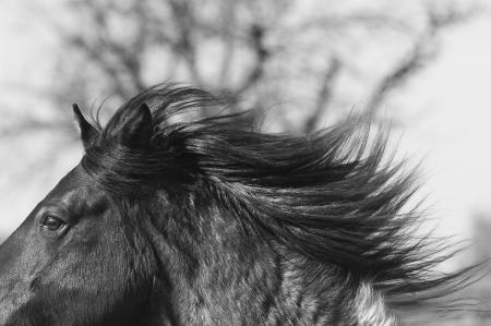 pferde__13