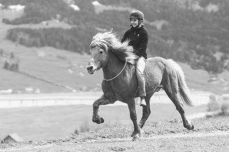 pferde__14