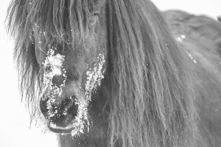 pferde__15