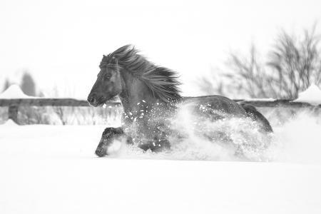 pferde__16