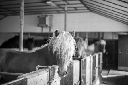 pferde__18