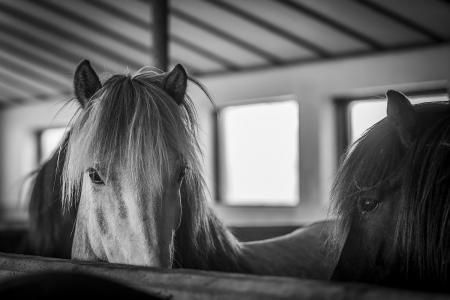 pferde__19