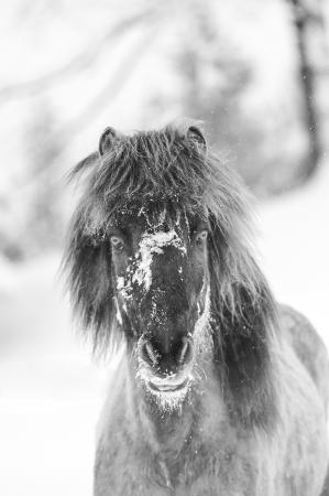 pferde__2