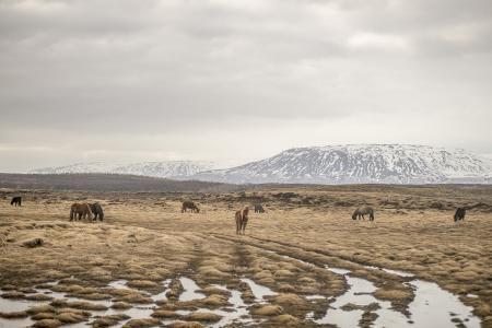 pferde__21