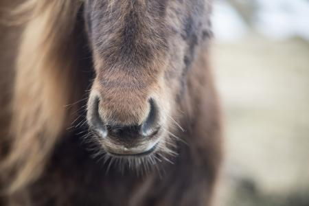 pferde__22