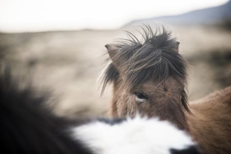 pferde__23
