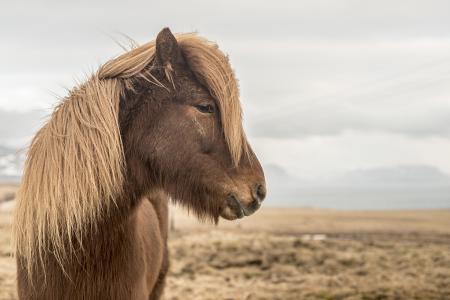pferde__25