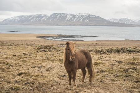 pferde__26