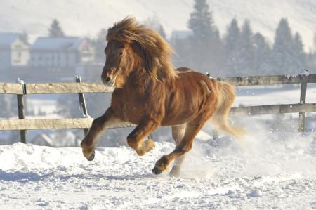 pferde__27