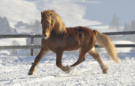 pferde__28