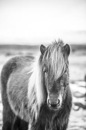 pferde__3
