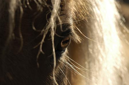 pferde__30
