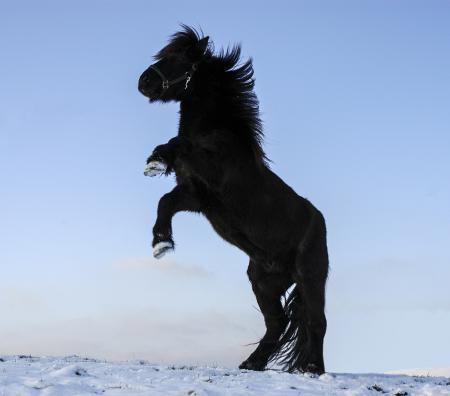 pferde__33