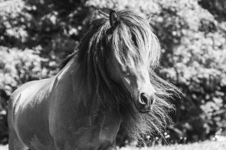 pferde__34
