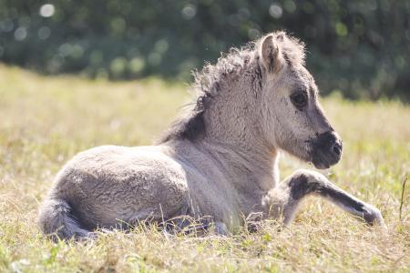 pferde__35