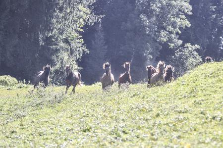 pferde__36