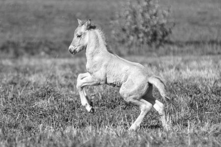pferde__39