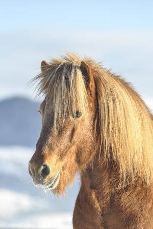 pferde__4