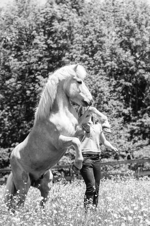 pferde__5
