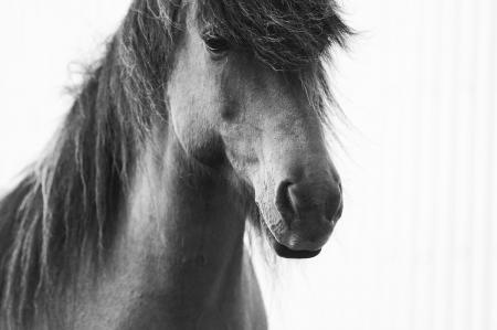 pferde__7