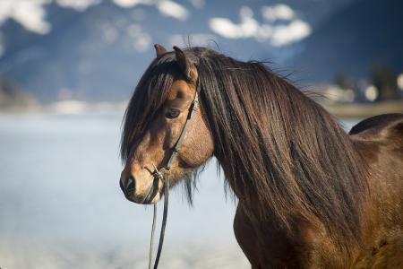 pferde__9