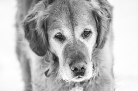 hunde__12