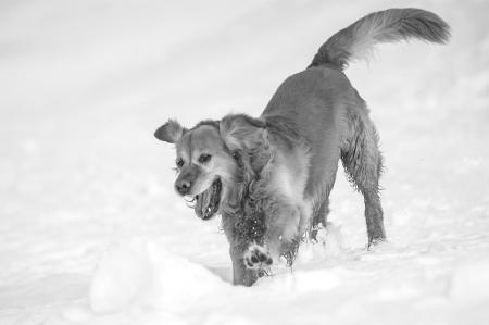 hunde__14