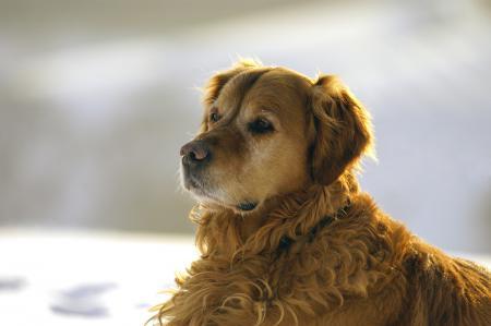 hunde__8